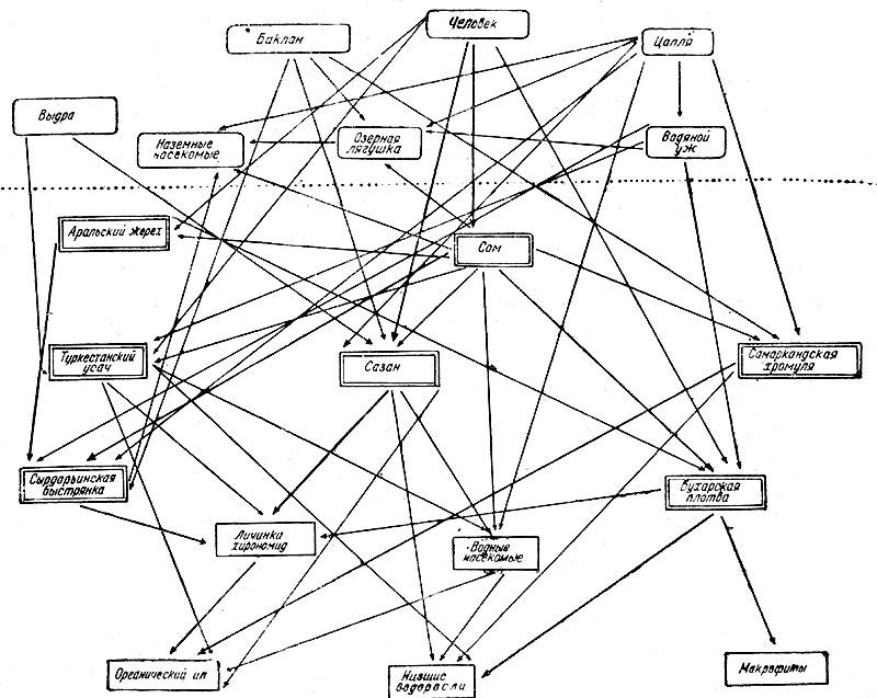 Схема пищевых связей в озерах