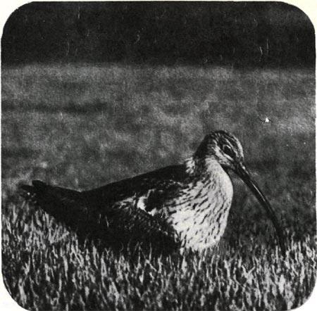 Как называется птица с желтым клювом