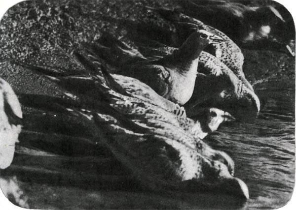 Пит в перьях ( ) кадры из фильма актеры - Кино