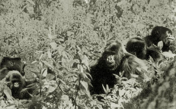 год под знаком гориллы читать