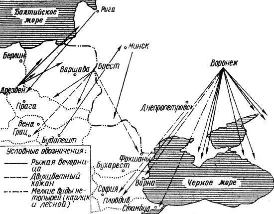 Схема миграционных перелетов