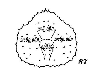 Схема строения карапакса