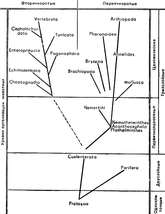 Филогенетические связи
