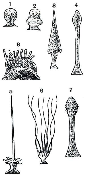 кишечные паразиты у человека фото