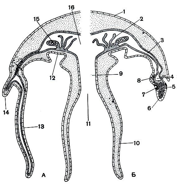 Схема продольного разреза