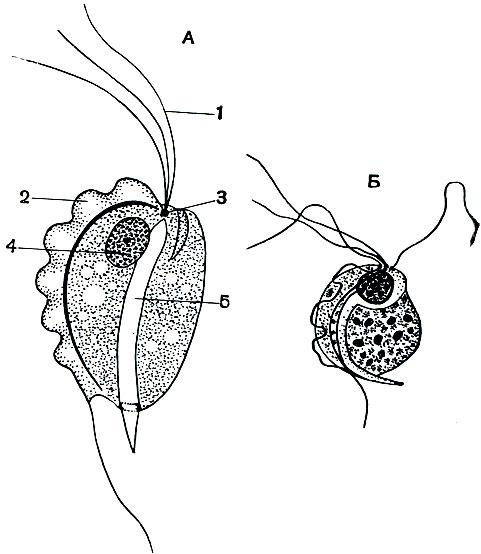 лисички от паразитов на водке