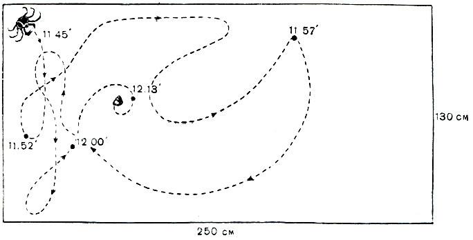 Путь камчатского краба к пище