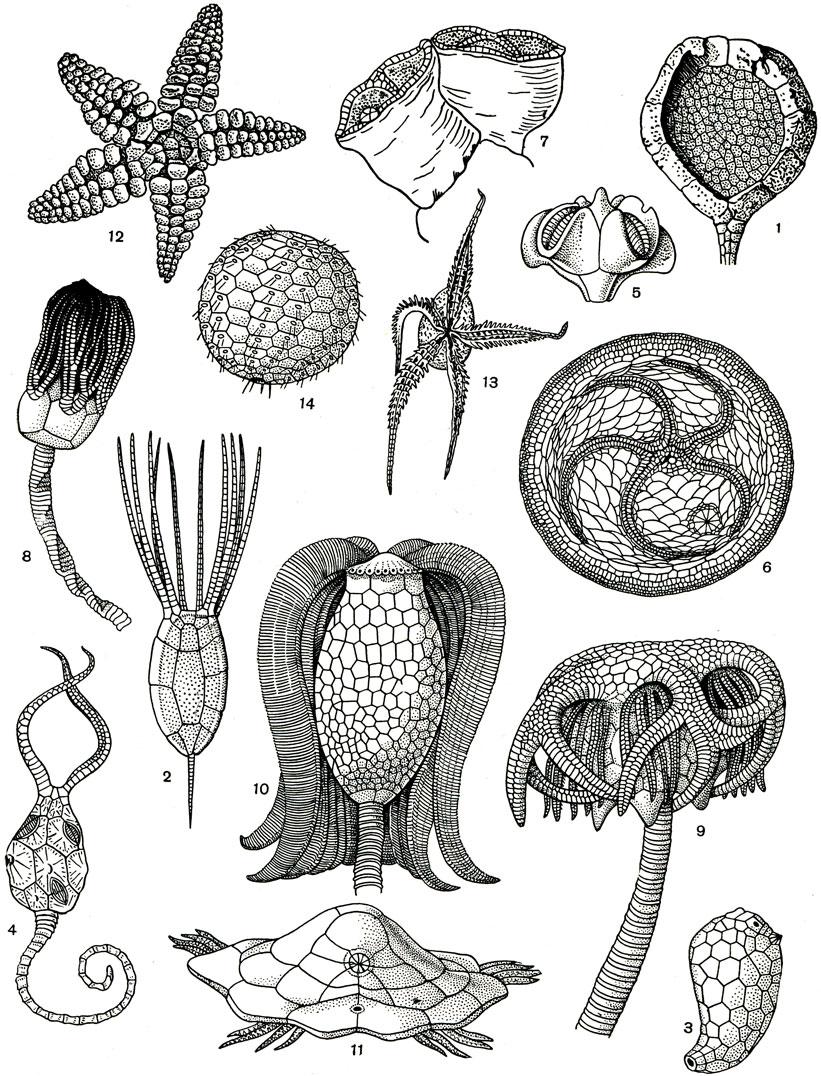 Тип иглокожие echinodermata 1968 Жизн� живо�н��