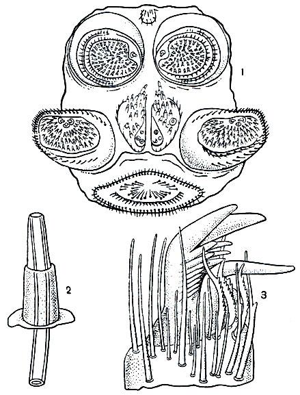 Лечение бородавок у врача